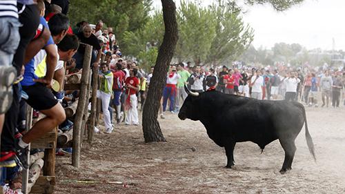 De tradición a polémico Torneo del Toro de la Vega