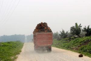 Caminhão carregado de cachos de frutos de dendê, em Riau, Sumatra no seu caminho; sendo levado para a extração do óleo de palma.