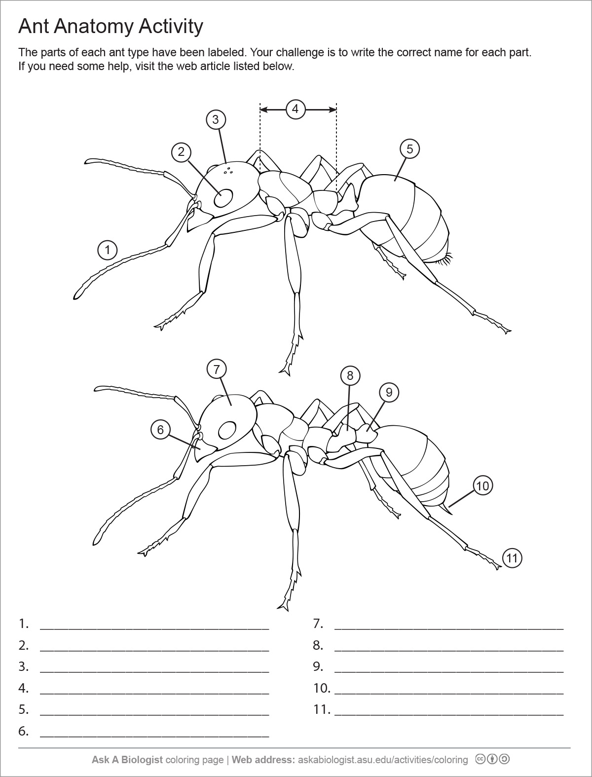 diagram of an ant life cycle worksheet bourns pots wiring handouts deviche designs
