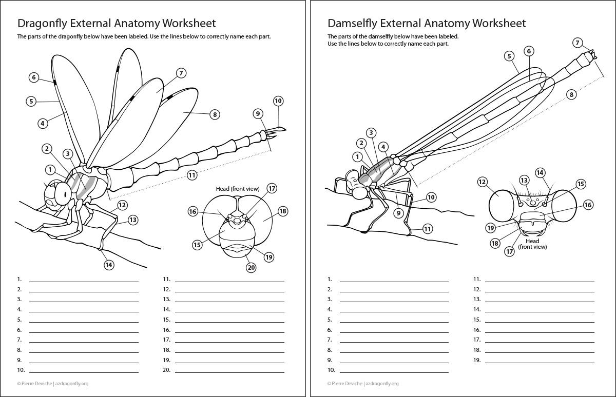 Body Movements Anatomy Worksheet