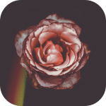 Download Koda Cam-Photo Editor,1998 Cam,Koda Filter,HD Cam v2.0 APK New Version