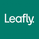 Download Leafly: Find your cannabis and CBD v7.15.0 APK