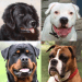 Free Download Dogs Quiz – Guess Popular Dog Breeds in the Photos v APK