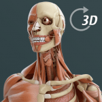 Visual Anatomy 3D | Human v1.2 APK Download For Android