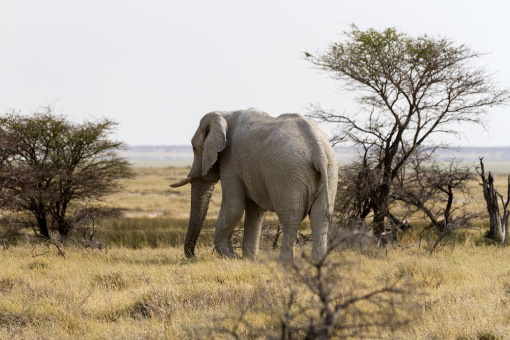 Elephants at Etosha National Park, Namibia