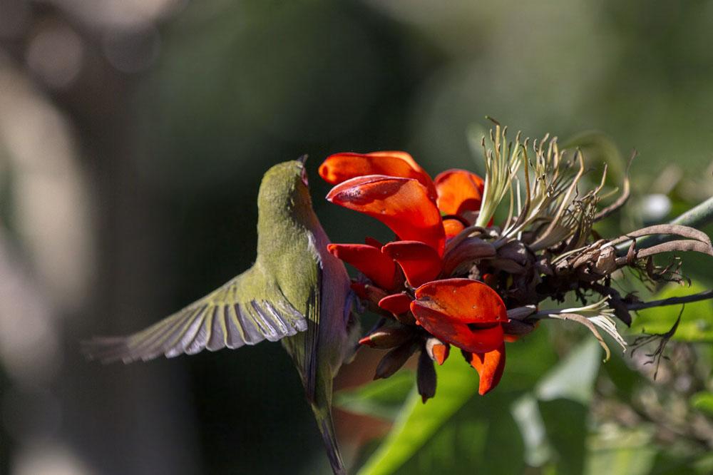 Kirstenbosch Botanical Garden, Cape Town