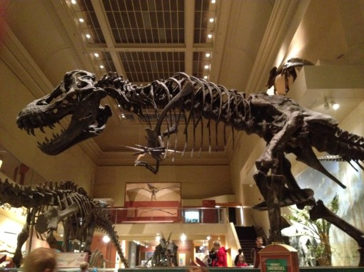 Dinosaur Exhibit at Smithsonian in Washington D. C.