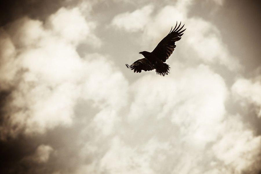 Crowy