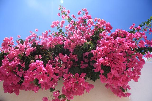 Griekse bloemen