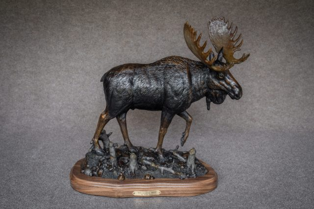 A moose steps past saplings trimmed by beavers in the bronze 'Riverbank Boss'.