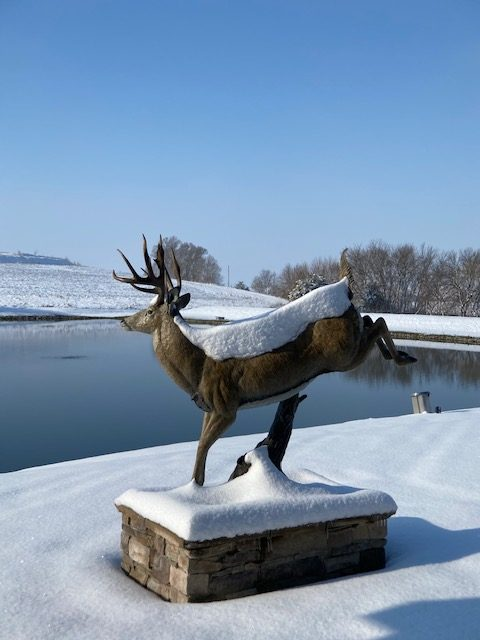 A life-sized bronze of a white tail deer, covered in snow.