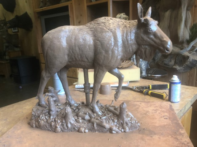 Devin Rowe's completed clay moose that will become the bronze 'Riverbank Boss'