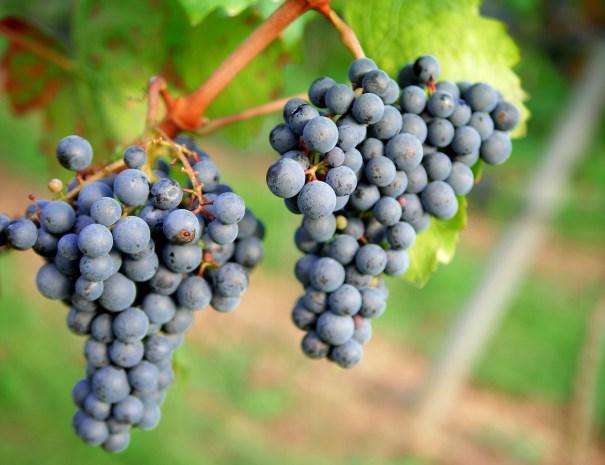 grapes-1717387_1920