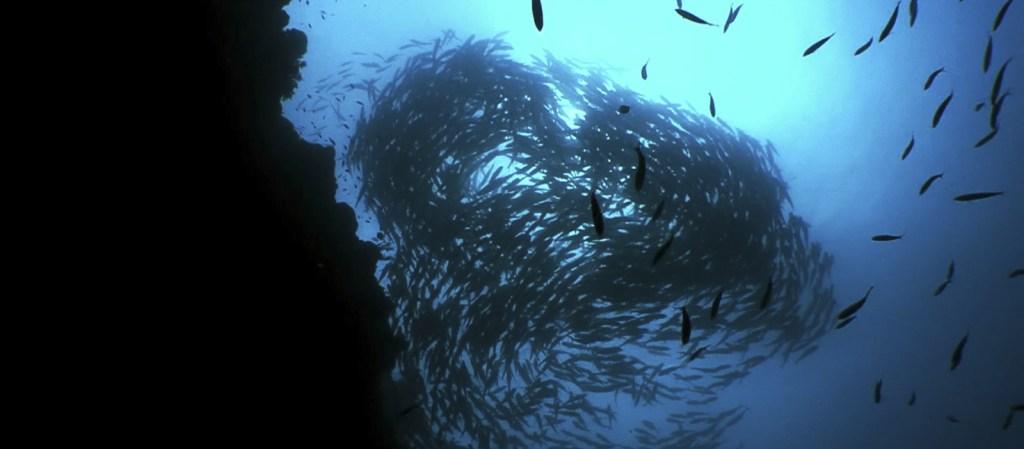 Reefs of the Visayas I_long