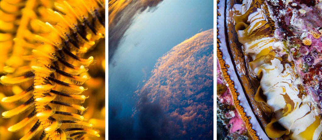 Compilation of 3 pictures: 1st close-p of orange-black arm of crinoid, 2nd shot taken up into the evening sky with clouds in orange and pink clouds against blue sky, 3rd close-up giant clam with an explosion of colours reminding of modern art paintings