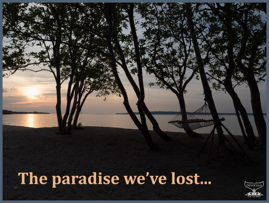 Postcard Warm regards from Devocean Pictures: Sillhoute of trees with hammock on beach overlooking the sea at sun rise. Text: The paradiese we've lost ...
