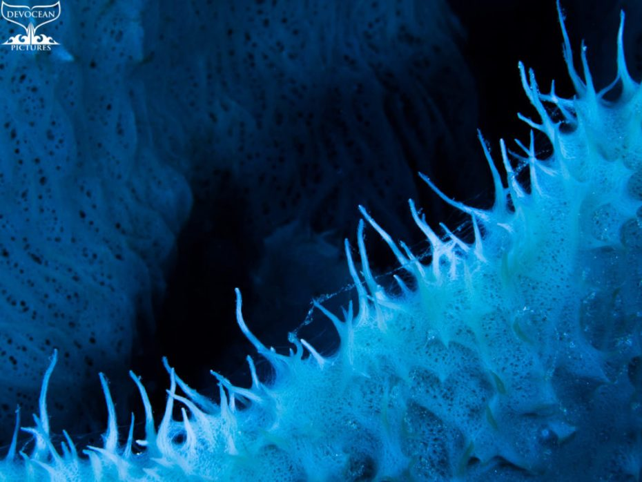 Photographing Art by nature: Underwater close-up of an opening of a prickly sponge curving from low left to up right with deep shadow in middle