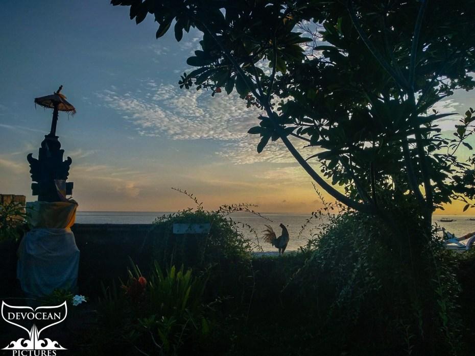 Blick von unserer Verana in Amed auf Bali (Indonesien) über die Gartenmauer, auf der ein Hahn steht in den Sonneaufgang über dem Meer. Haustemel und Bäume bilden Silhoutten gegen den Himmel.