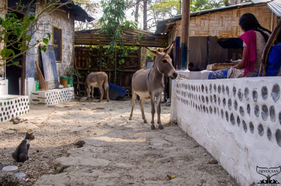 Yard of Blue Planet Andamans in India shwoing their white walls build in with glass and plastic bottle. To the left is the kitchen, in the back the entrance and to the right restaurant area with kitchen staff working. Left bottom is a small cat sitting, one donkey looks for food around the gate and another watches the Indian lady.