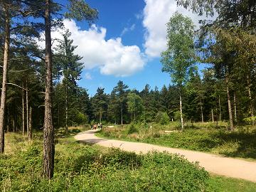 gruffalo-Hunt-Haldon-Forest-Pathway-Devon