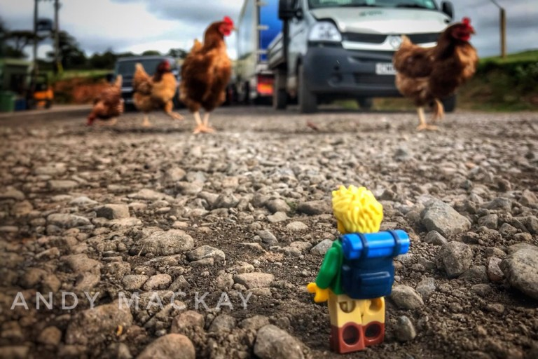 When Little Explorer played with the chickens at Greendale Farm, Near Exeter in Devon.