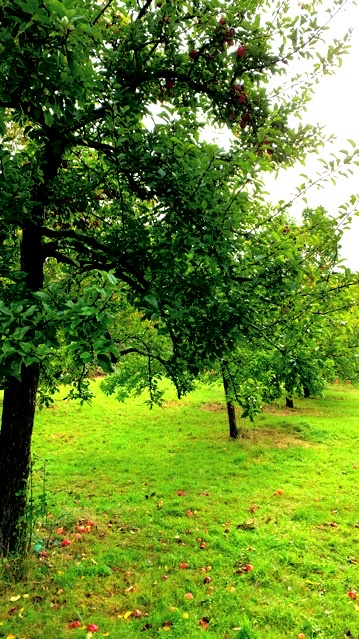 The Apple Orchard at Killerton National Park