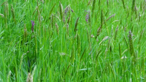 meadow close up