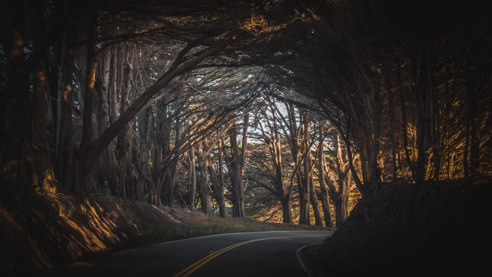 wood and road