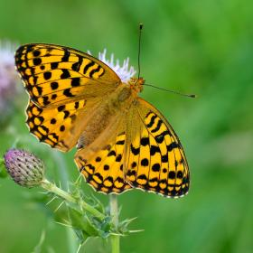 Butterfly conservation in our upcoming courses