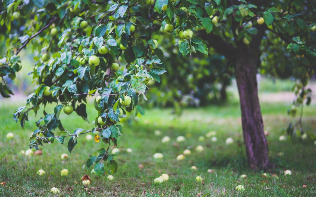 Daily Devotion – Fruit And Prosperity