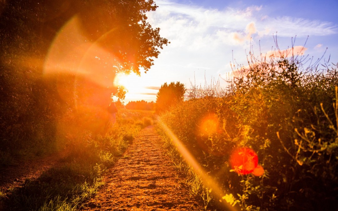 Daily Devotion – The Brighter Path