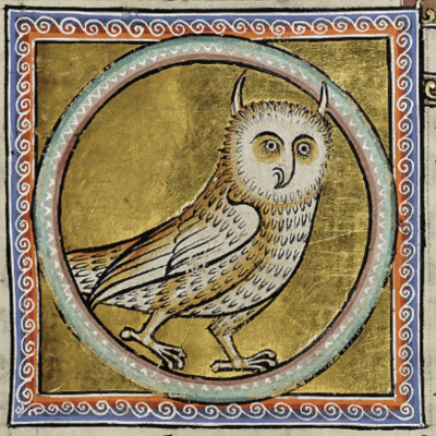 Owl from Illuminated Bestiary