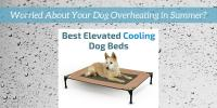 Cooling Dog Bed  Find the Best Elevated Dog Bed to Keep ...
