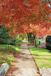 Sidewalk in autumn - Salem, Oregon wikimedia by M.O. Stevens GNU Free Documentation License