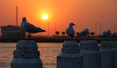 http://commons.wikimedia.org/wiki/File:Sunset_%26_The_Seagulls_(8576411741)_(4).jpg