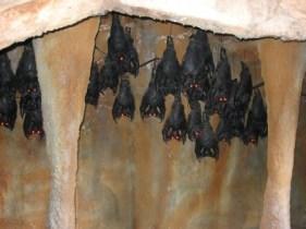 https://commons.wikimedia.org/wiki/File:The_Bat_theming_Lagoon_Utah.JPG