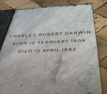 https://commons.wikimedia.org/wiki/File:Charles_Darwin%27s_grave_at_Westminster_Abbey.jpg