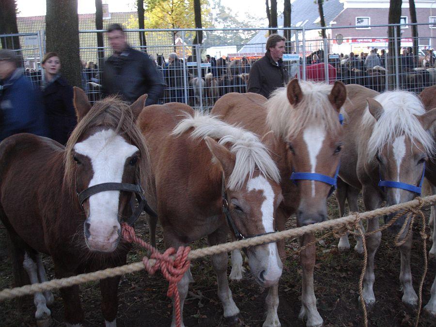 zuidlaardermarkt Horse fair art 13