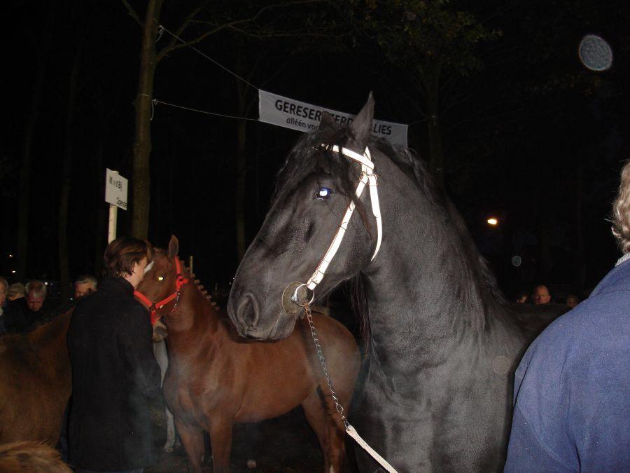 zuidlaardermarkt Horse fair art 3