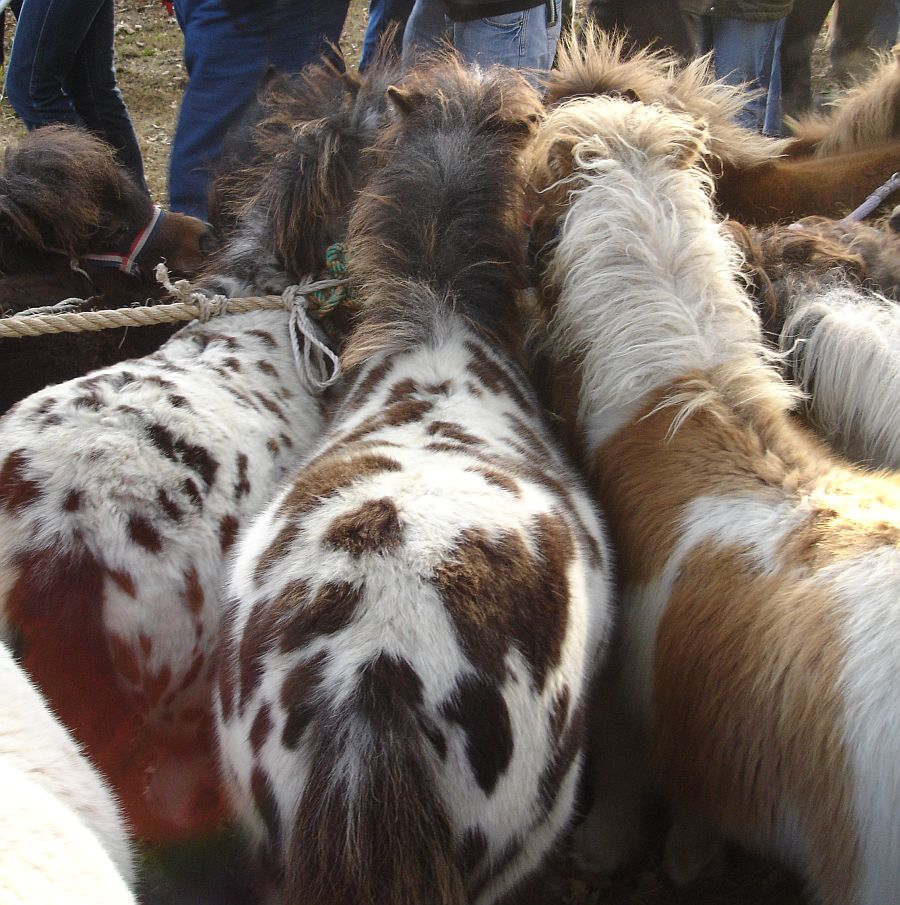zuidlaardermarkt Horse fair art 30