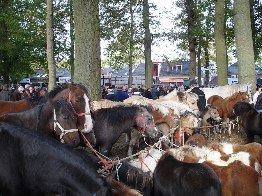 zuidlaardermarkt Horse fair art 41