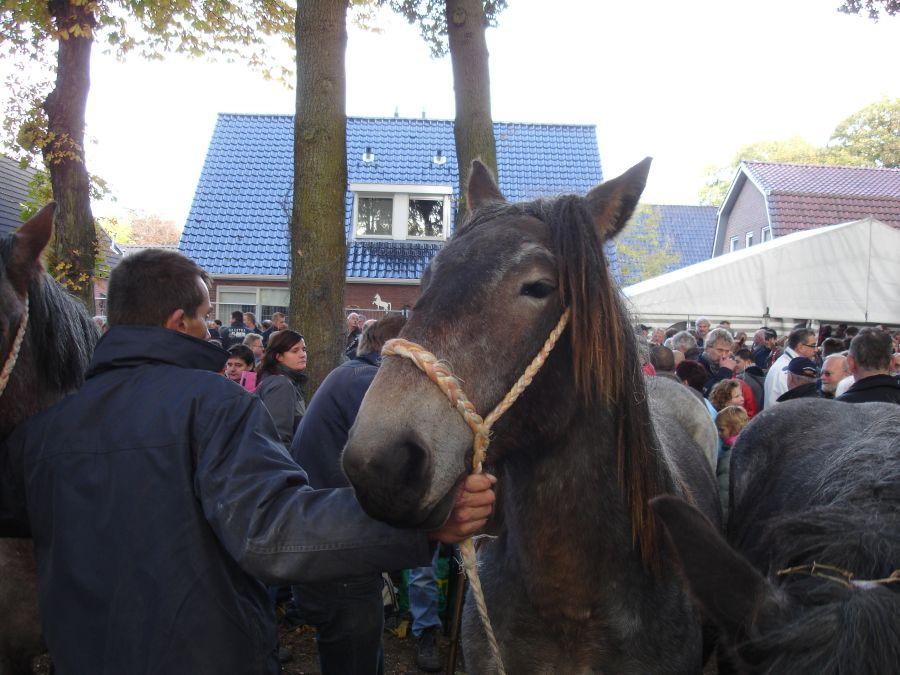 zuidlaardermarkt Horse fair art 49