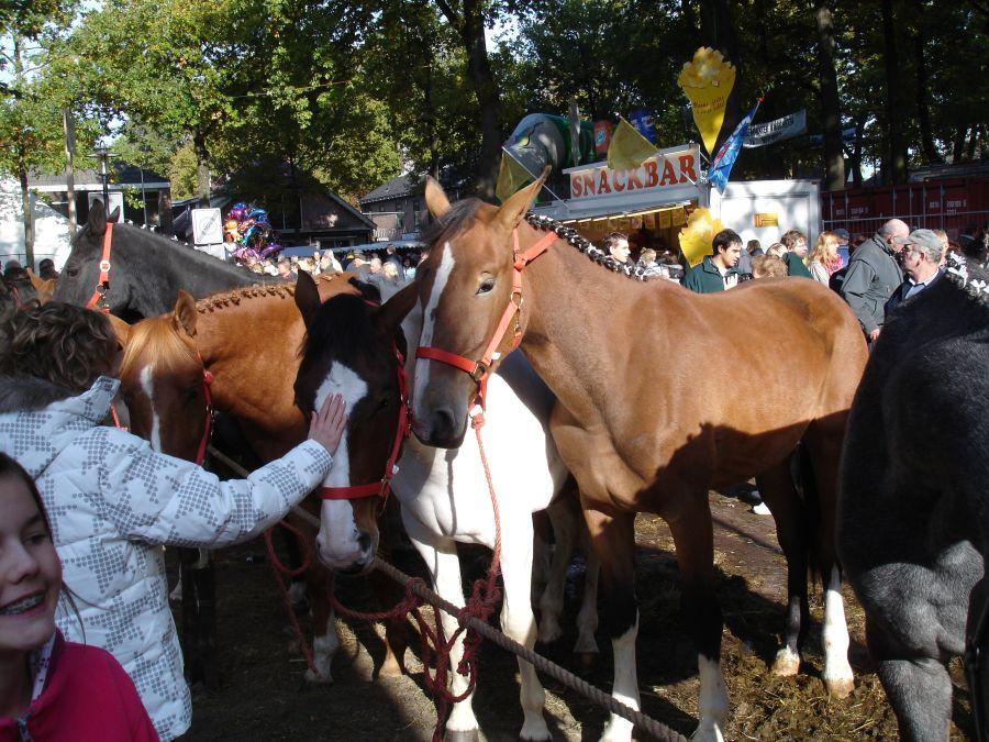 zuidlaardermarkt Horse fair art 61