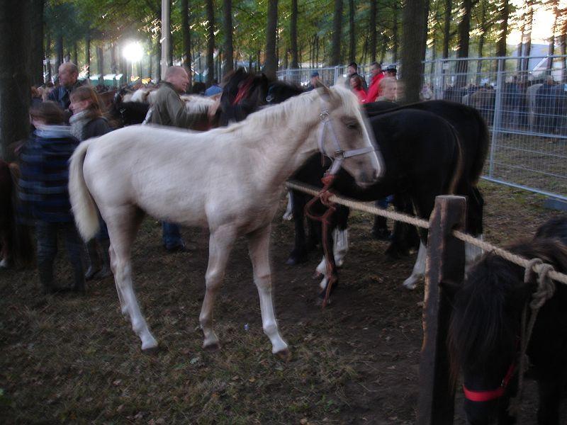 zuidlaardermarkt Horse fair art 9