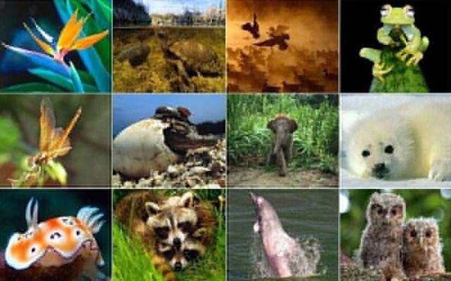 2020 Yılında 36 Hayvan Ve Bitki Türünün Yok Olduğu İlan Edildi
