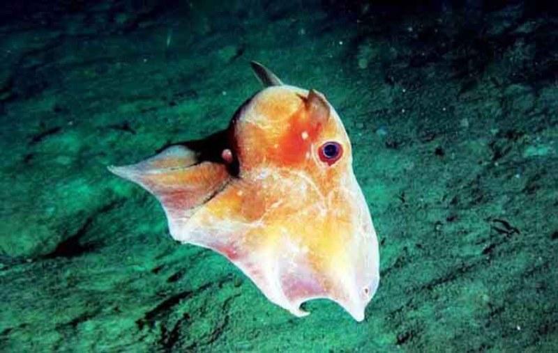 jenis ikan dalam laut