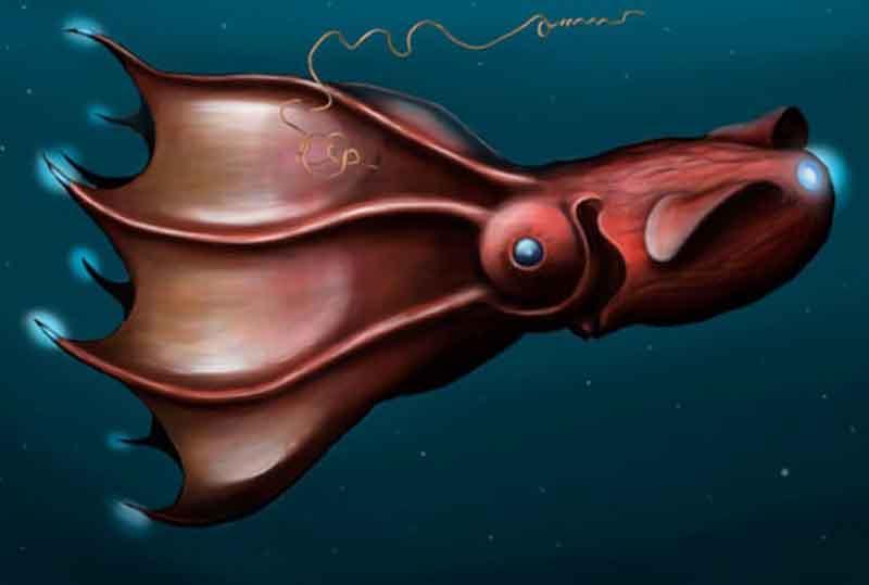 jenis ikan laut dalam