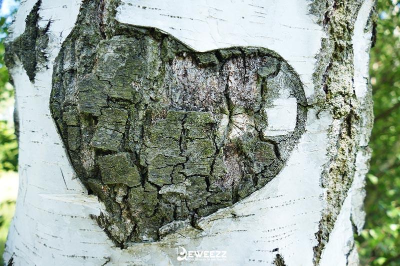 Contoh Puisi Cinta Romantis