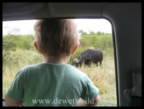 Joubert watching a buffalo from inside our vehicle, in the Kruger Park