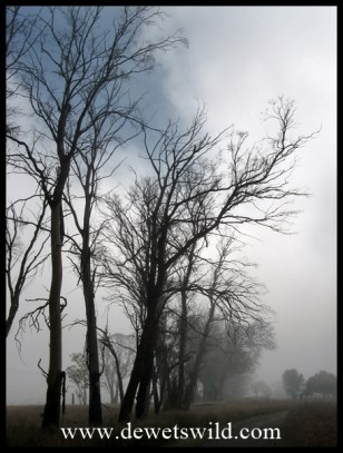 Another misty scene
